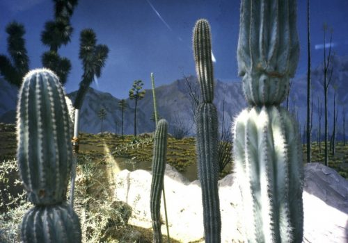 kaktus 1.jpg 1772x1293 pixels